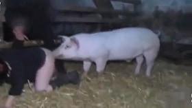 Безнравственная женщина трахается с молодой свиньей