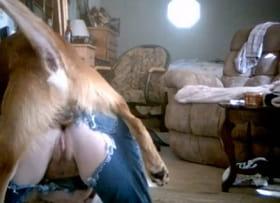 Муж совместно с собакой ебут жену в любительском порно с животными