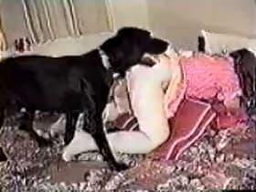 Домашний кобель с воодушевлением трахает распутную хозяйку раком и лижет ей пизду